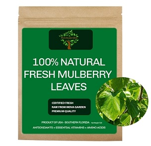 Fresh Mulberry Leaves - 20 Leaves