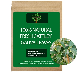 Fresh Cattley Guava Leaves - 25 Leaves