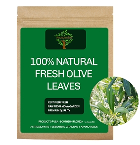 Fresh Olive Leaves - 100 Leaves