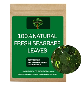 Fresh SeaGrape Leaves - 25 Leaves
