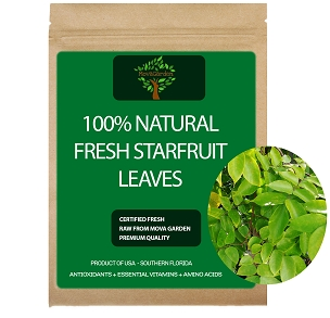 Fresh Starfruit Leaves - 50 Leaves