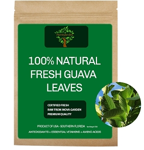 Fresh Guava Leaves - 20 Leaves