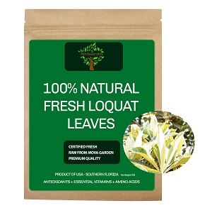 Fresh Loquat Leaves - 30 Leaves