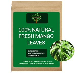 Fresh Mango Leaves - 20 Leaves