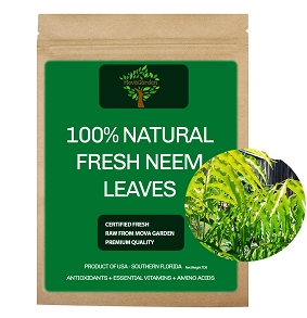 Fresh Neem Leaves - 3oz (100 - 150 Leaves)