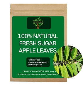 Fresh Sugar Apple Leaves - 25 Leaves